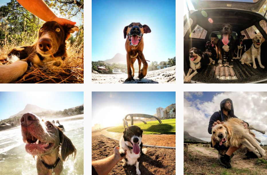 The-Ultimate-Dog-Walker-poochy_coo-•-Instagram-photos-and-videos